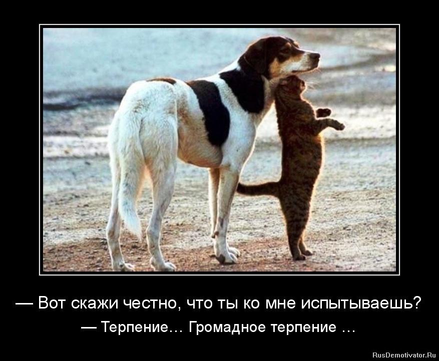 1337973385--vot-skazhi-chestno-chto-ty-ko-mne-ispytyvaesh