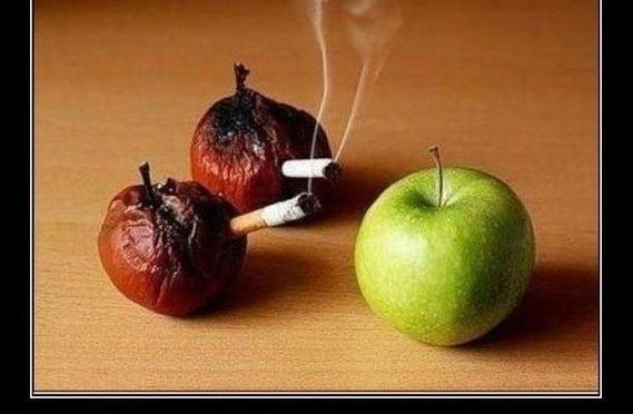 Истинное знание умеет сказать «нет»
